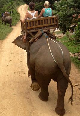 Tourists rinding elephant