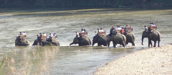 elephants in river