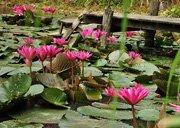 Hotel Maison Dalabua lotus pond