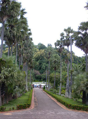 Royal Palace Museum - the road leading out of the museum